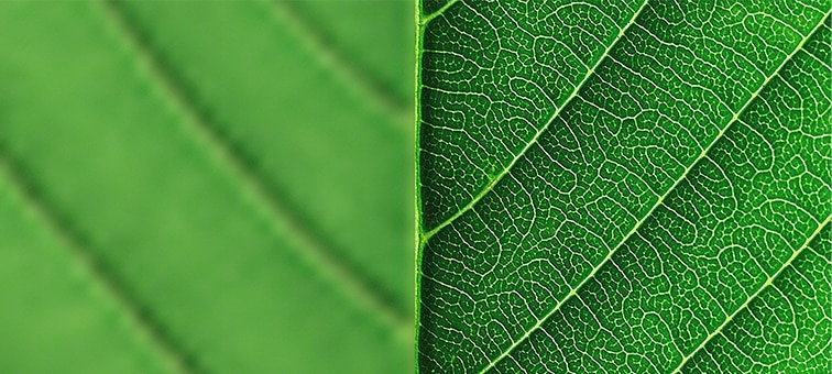 Close-up of leaf showing detail with 8K XR Super Resolution