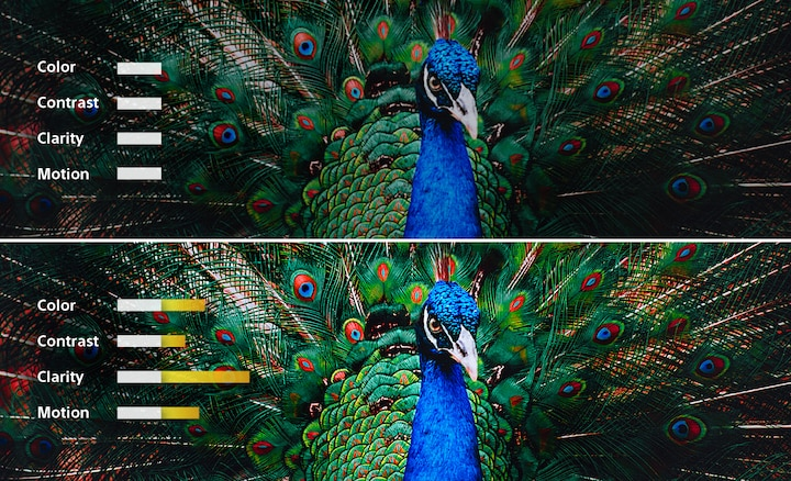 A split-screen image of a peacock showing how colour, contrast, clarity and motion are adjusted for a picture in balance